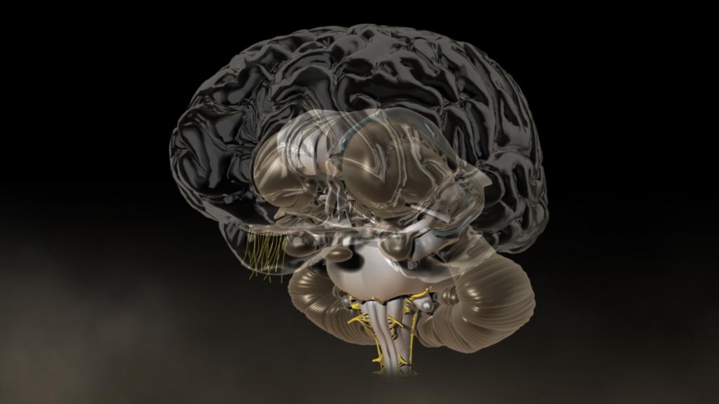 3D-Animation   Gehirn