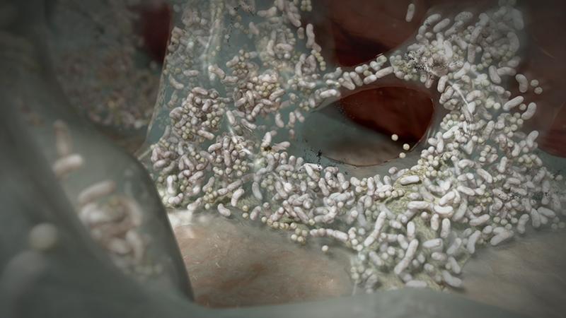 3D-Animationsfilm | Biofilm